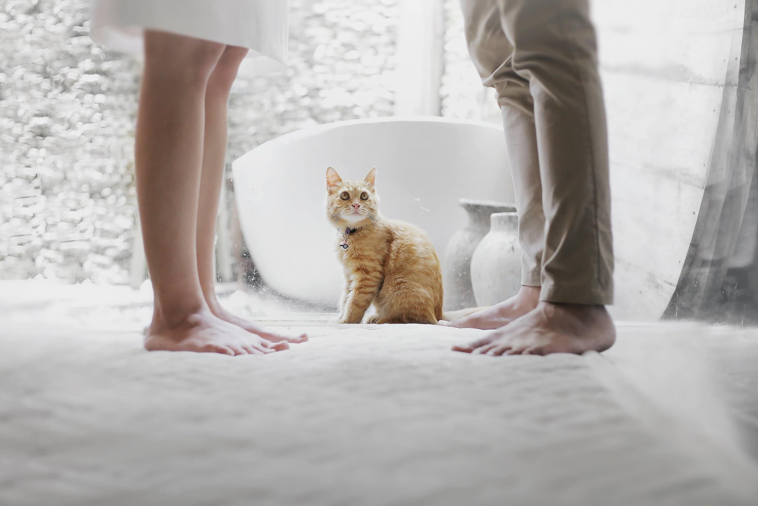 how to acclimate a new kitten into your home