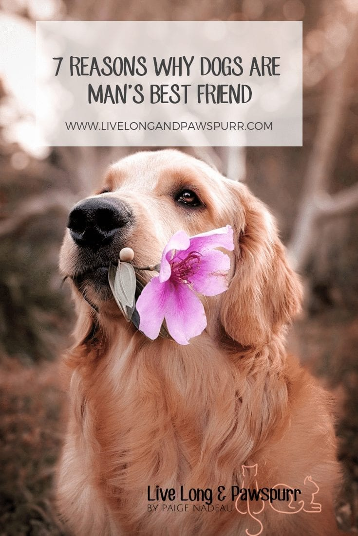 7 Reasons Why Dog's are Man's Best friend