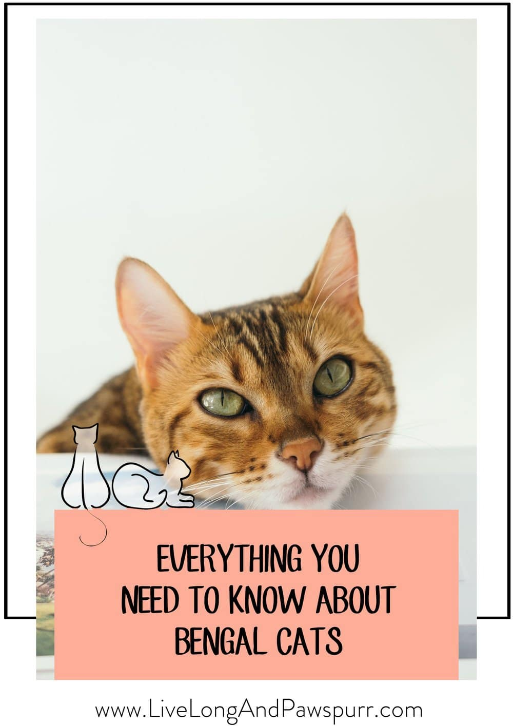 Everything you need to know about Bengal Cats!