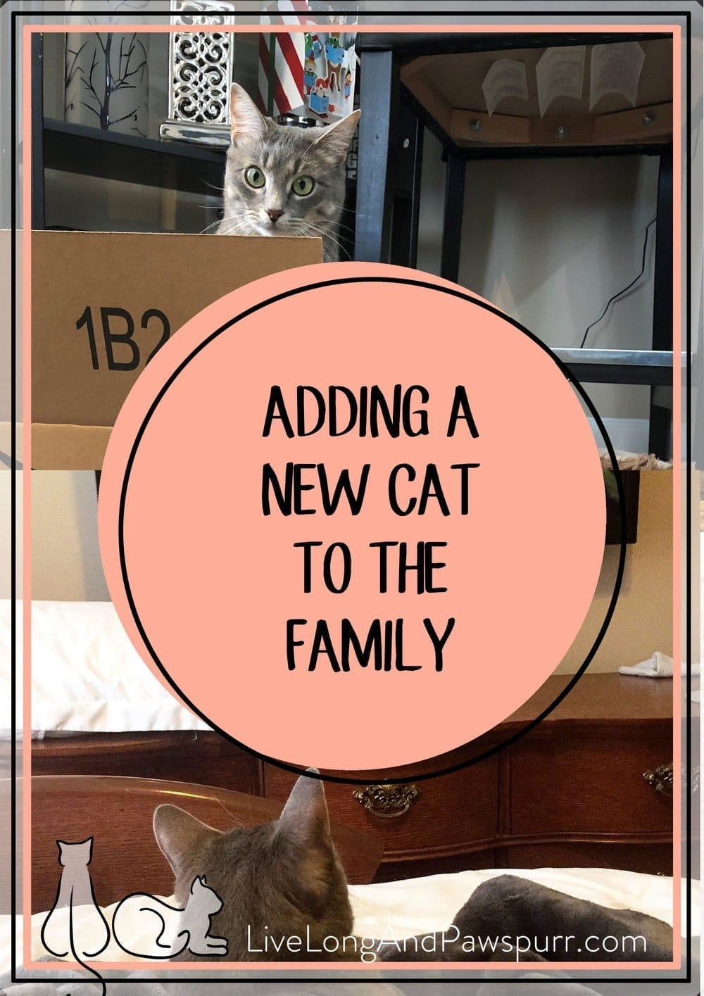 Adding a Cat to the family