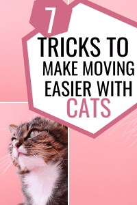 7 tricks to make moving easier with cats #cattricks #cattips #cathacks