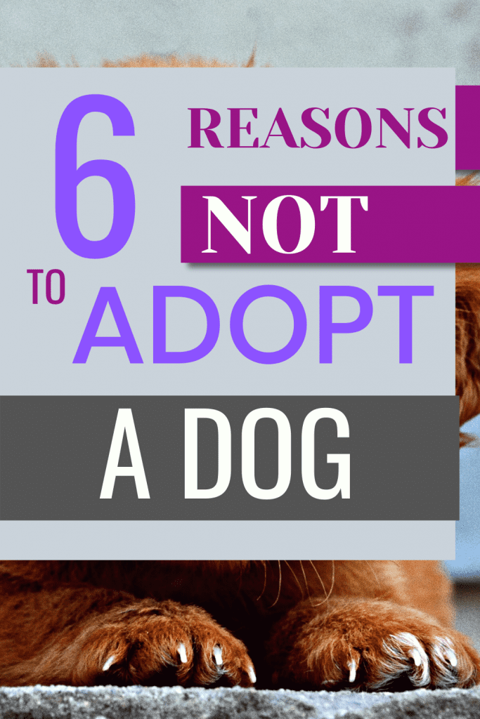 why you should not adopt a dog #puppyadoption #dogadoption #rescue #adoptdontshop