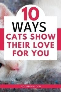 Learn the 10 Ways Cats Show Love | Cat Behavior | Understanding Cats #catbehavior #understandingcats #cats101