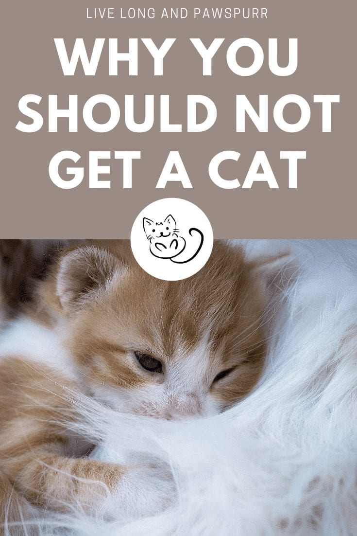 why you should not get a cat