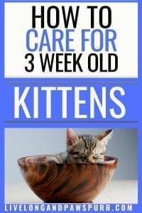 All about three week old kittens #newkitten #kittencare #threeweekold