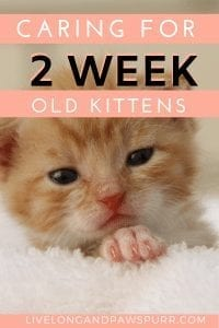 everything you need to know about two week old kittens #kittencare