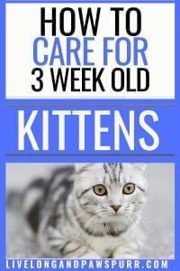 all about 3 week old kittens #kittencare #allaboutkittens #threeweekoldkittens