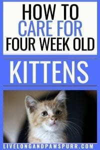 all about 4 week old kittens #kittencare #fourweeks #newkitten