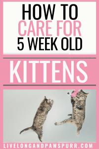 all about five week old kittens #fiveweeksold #kitten #newbornkittens