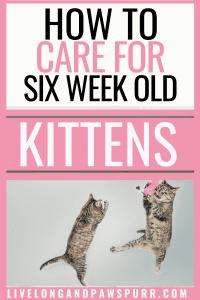 all about six week old kittens #kittencare #newkitten #kittens #cats