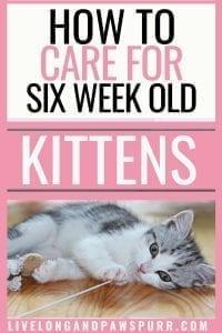 all about 6 week old kittens #kittens #sixweekold #sixweekoldkittens