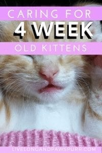 all about four week old kittens #kittencare #newbornkittens
