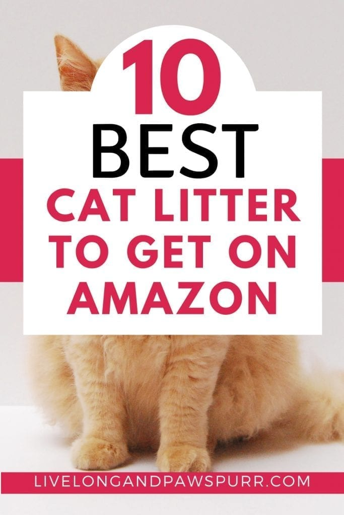 Best Cat Litter To Get On amazon