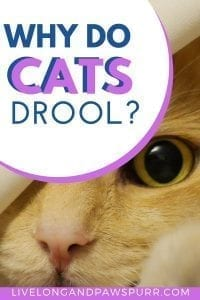 why do cats drool? learn the reasons. #cats #catdrool #catbehavior #catquestions
