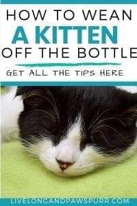 how to wean kittens off the bottle #weankitten #wean #bottlefeeding #kittencare
