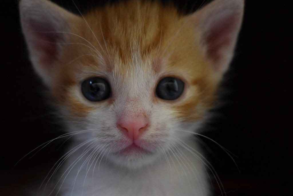 is it ok to take a kitten at 7 weeks old?