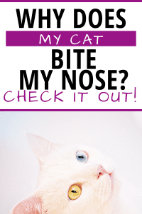 WHY DOES MY CAT BITE MY NOSE? #WHYCATS #catbehavior #understandingcats