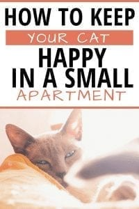 How to Keep Your Cat Happy In A Small Apartment #cathowtos #cats #catapartment