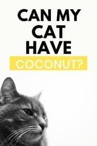 can cats have coconut? #coconuts #cancatseats #catquestions