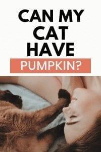 Cat Cats Have Pumpkin? #pumpkin #cancatseats #catfood #catquestions