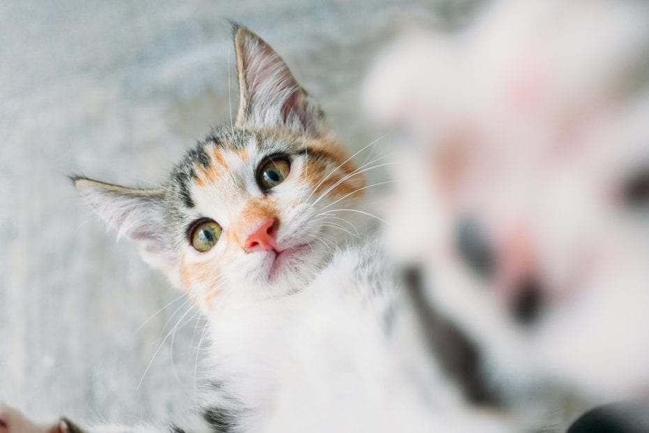 Are eggs safe for cats